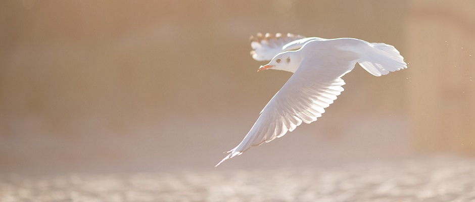 Juni: Als een vogel